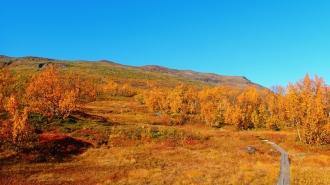 Autumn coloured Nuolja